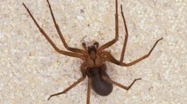 Spider Image #259