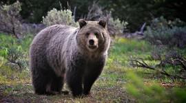Bear Photo #889