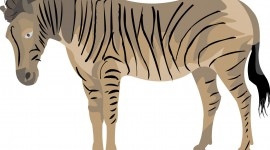 Zebra for iPad #986