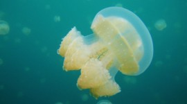 Jellyfish Pictures #573