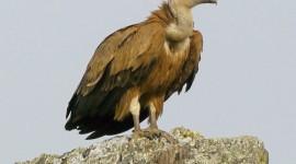 Vulture Images #878