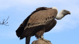 Vulture 2015 #352