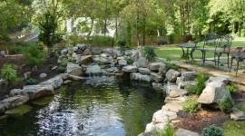 Pond free download #662