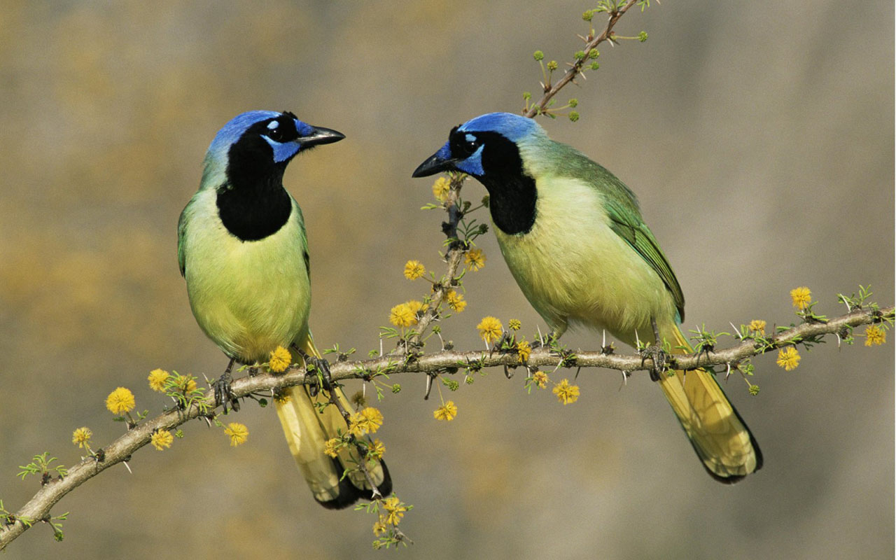 Birds wallpapers high quality download free - Hd birds images download ...