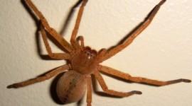 Spider hd pics #921
