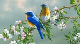 Birds 1080p #189