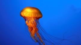 Jellyfish wallpaper 1920x1080 #488