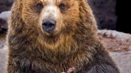 Bear Image #329