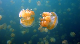 Jellyfish widescreen wallpaper #414