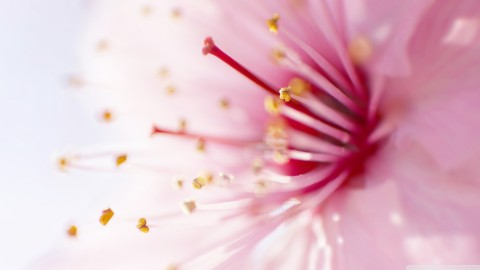 Pink Flower wallpapers high quality