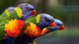 Birds Wallpaper #441