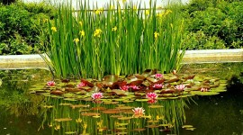 Pond High Resolution #980