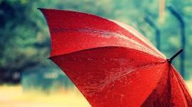Umbrella Wallpaper High Definition