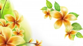 Frangipani Wallpaper Widescreen