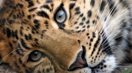 Cheetah Wallpapers Photos