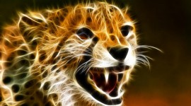 Cheetah Wallpapers High resolution
