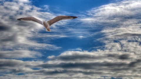 Gull wallpapers high quality