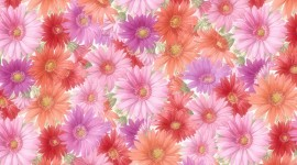 Different Fowers Wallpaper