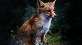 FOX Wallpapers High resolution