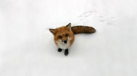 FOX Photos