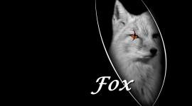 FOX Wallpaper  Widescreen