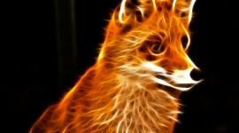 FOX Wallpapers High Definition