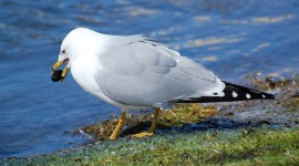 Gull Photos