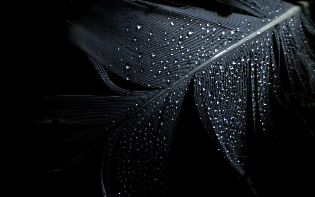 Black Wallpapers Wallpapers High Quality Download Free