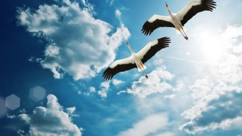 Crane wallpapers high quality