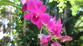 Dendrobium Orchid Photos