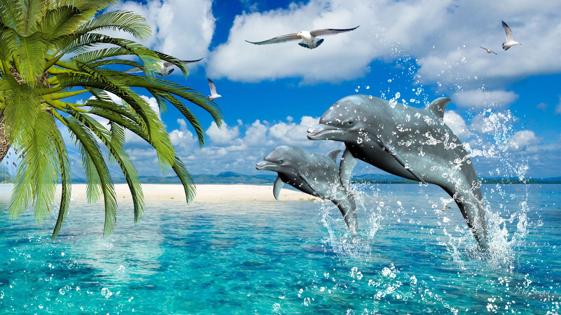 Dolphins wallpapers high definition wallpapers cool nature - Dolphin Wallpapers