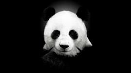 panda_wallpaper_6