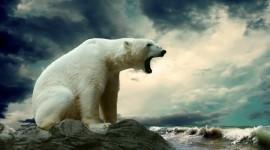 Polar Bear High quality wallpapers