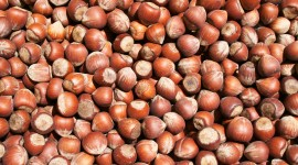 Hazelnut Wallpaper Download