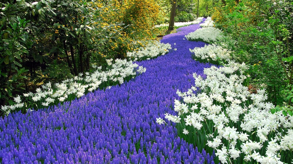 Hyacinth wallpapers HD