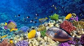 Red Sea Wallpaper Download Free