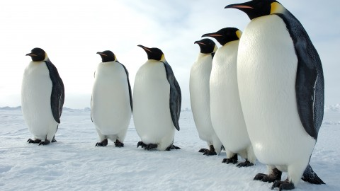 Penguin wallpapers high quality