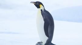 Penguin Wallpaper For IPhone