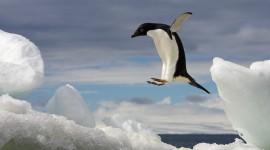 Penguin Desktop Wallpaper HQ