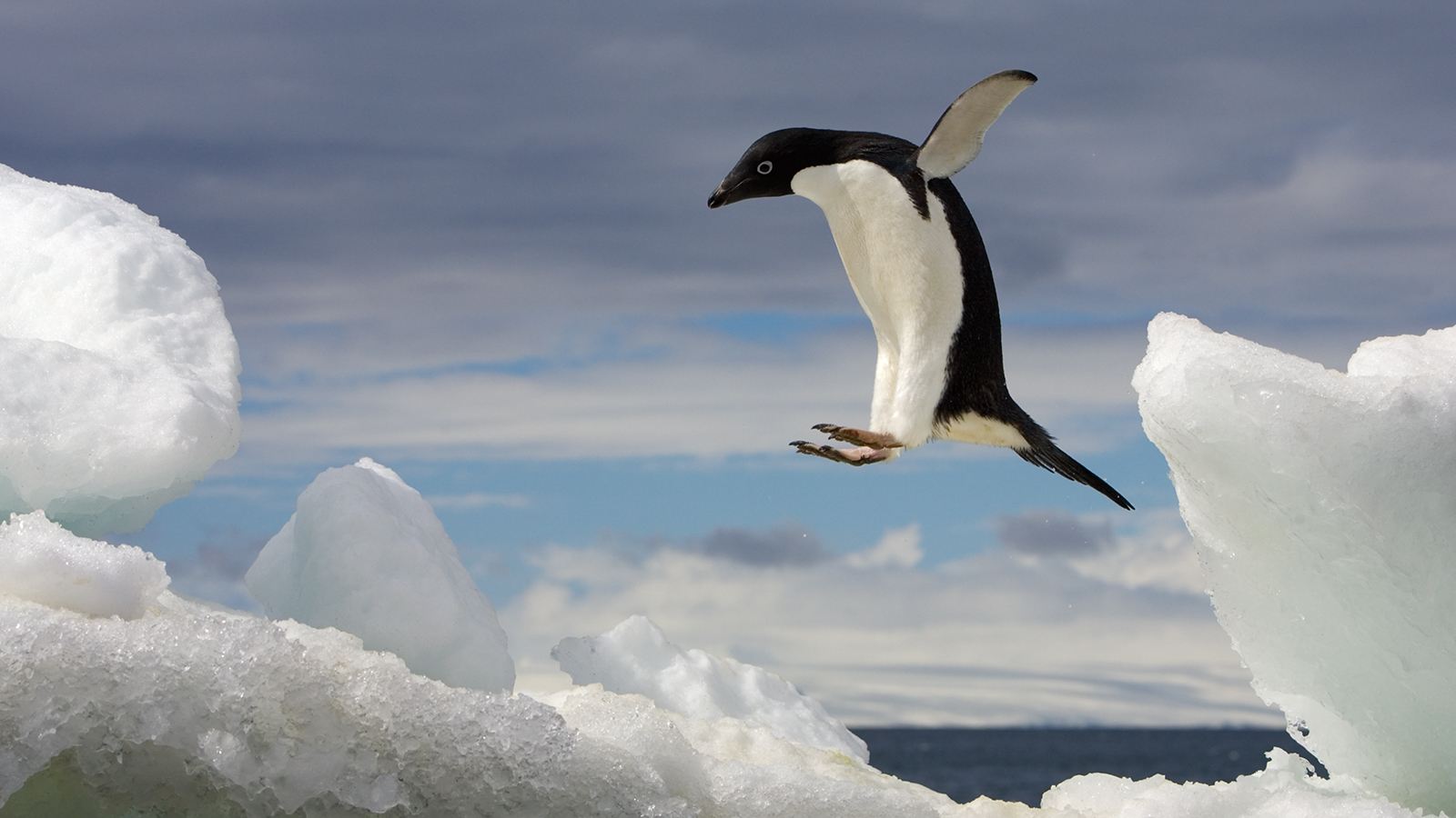 penguin desktop wallpapers wallpapers high quality | download free