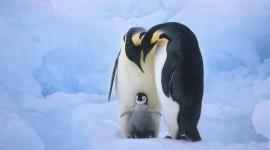 Penguin Desktop Background