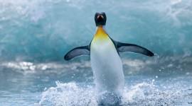 Penguin Desktop Wallpaper For PC