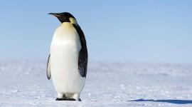 Penguin Wallpaper High Definition