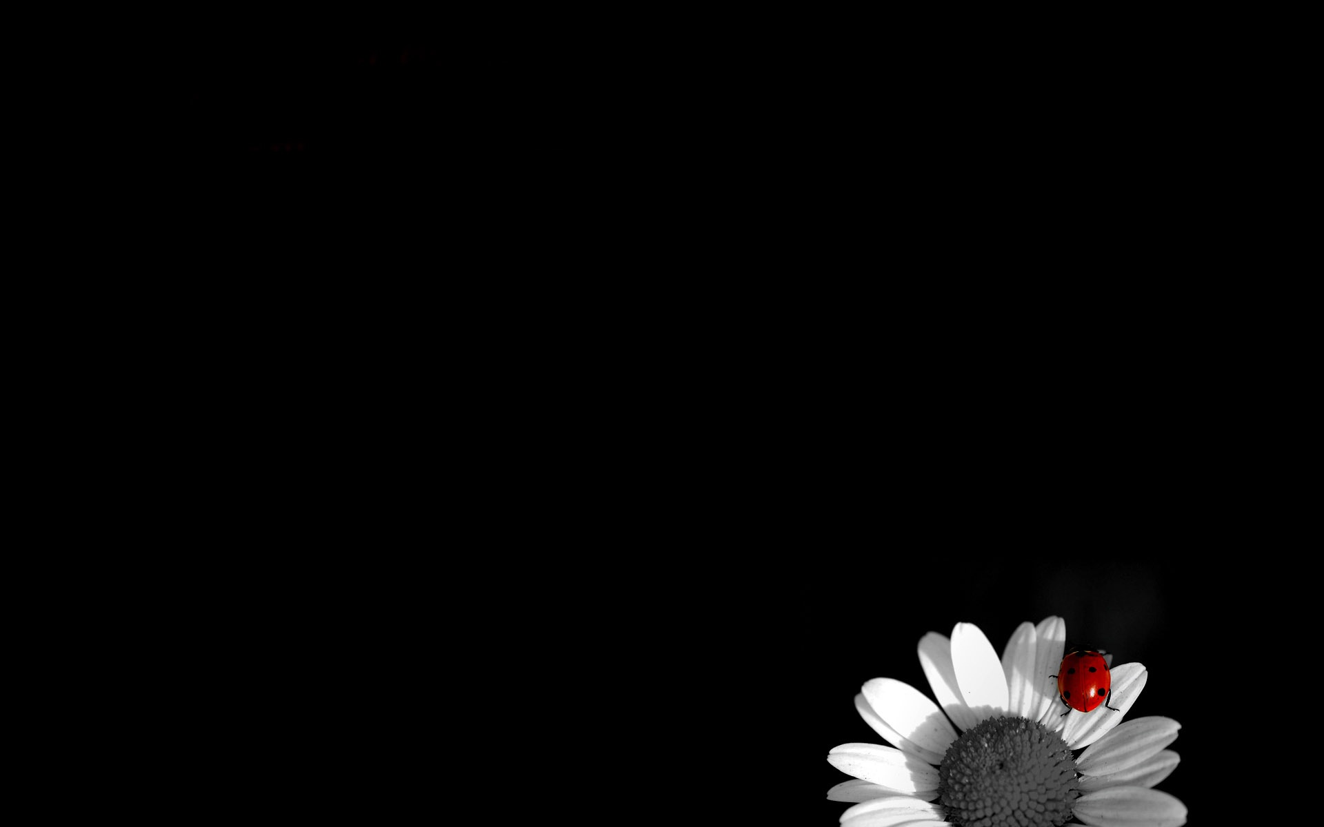 Black and White Wallpapers High Quality | Download Free