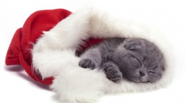 Christmas Cats Best Wallpaper