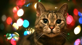 Christmas Cats Desktop Background