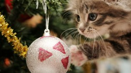 Christmas Cats Desktop Wallpaper