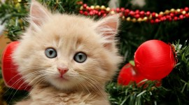 Christmas Cats Desktop Wallpaper For PC