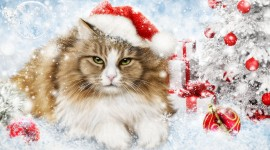 Christmas Cats Desktop Wallpaper Free