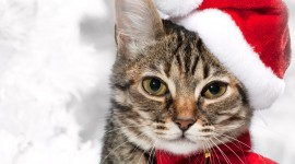 Christmas Cats Desktop Wallpaper HD